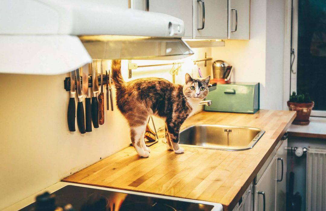 Cách khử mùi nhà bếp siêu đơn giản, hiệu quả không tưởng